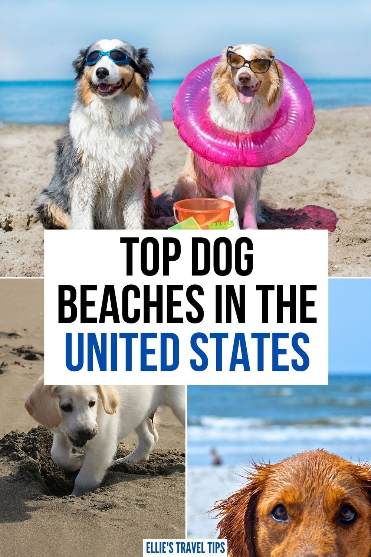 USA dog beaches
