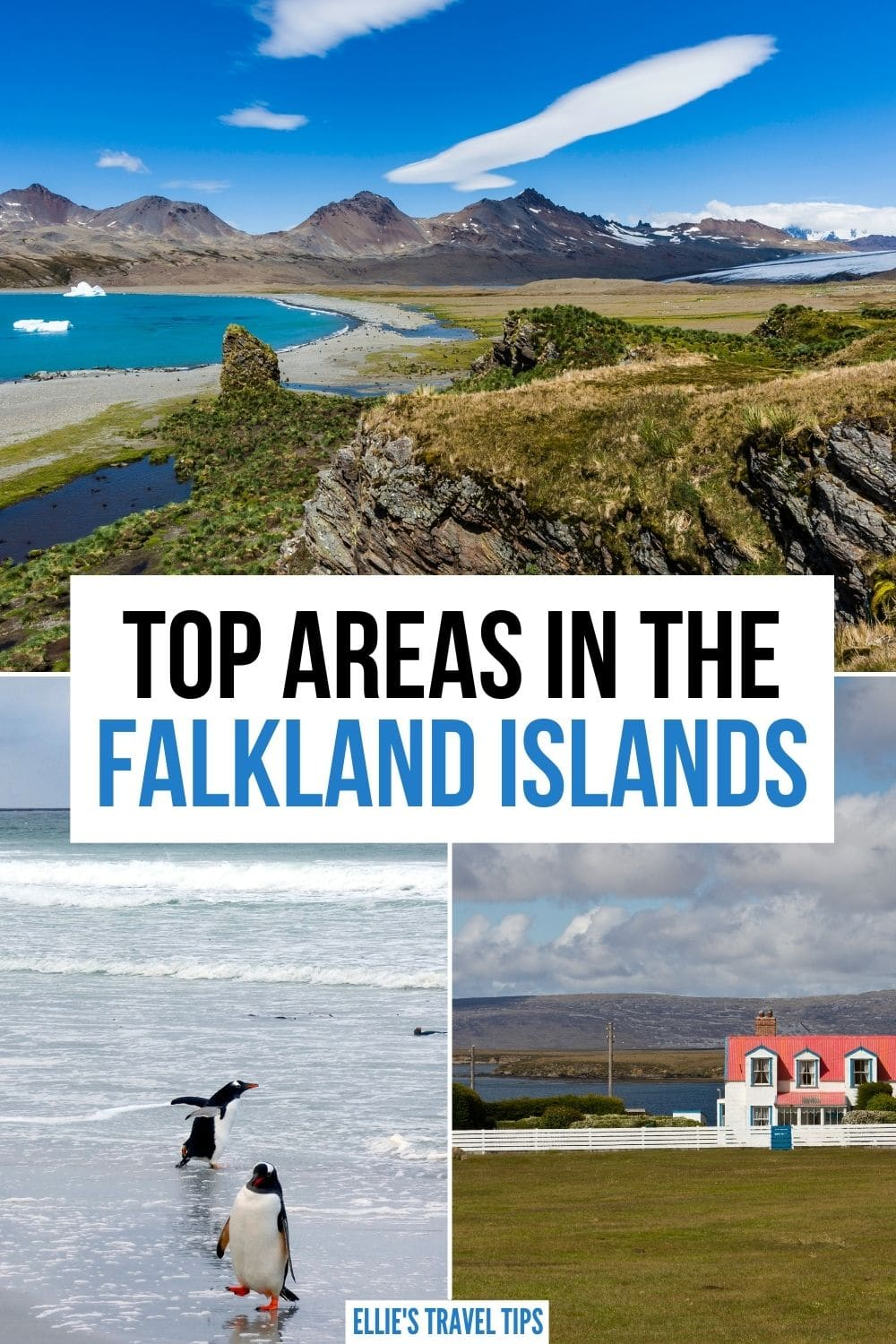 what to do in the Falkland Islands